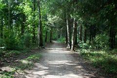 Bana i sommarskogen med främre sikt för solljus Royaltyfri Fotografi