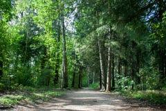 Bana i sommarskogen med främre sikt för solljus Royaltyfri Bild