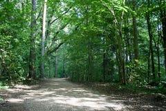 Bana i sommarskogen i solljus med oigenkännligt fotvandra för familj Royaltyfria Foton