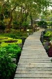 Bana i trädgården på den varma våren för huggtand Royaltyfri Foto