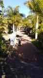Bana inom av botaniska trädgården royaltyfri bild