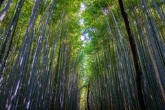 Bana inom bambudungen i Arashiyama, Kyoto fotografering för bildbyråer