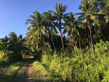 Bana med palmtrees i Anda Arkivfoto