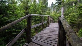 Bana med träplankor till och med skog royaltyfri bild