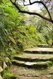 Bana mellan grön vegetation i en trädgård arkivfoton
