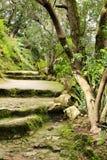 Bana mellan grön vegetation i en trädgård royaltyfri bild