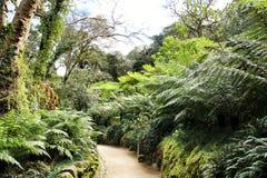 Bana mellan grön vegetation i en trädgård royaltyfri foto