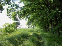 Bana mellan skogen och fälten royaltyfri bild