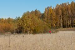 Bana mellan skogen och fältet arkivbilder