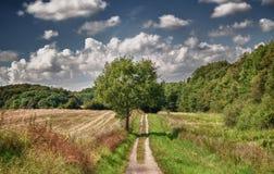 Bana mellan skogen och fältet royaltyfri fotografi