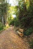 Bana och bänk i den lövrika skogen fotografering för bildbyråer