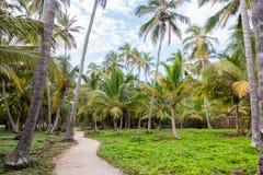 Bana och palmträd arkivbilder