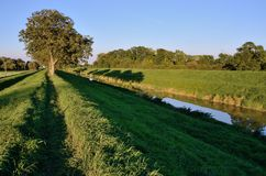 Bana och träd på flodbanken Arkivfoton