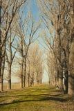 Bana och trees Royaltyfri Bild