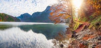 Bana på Alpsee sjökust i höstdekor Arkivfoto