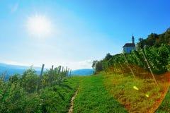 Bana på vingårdar på kullecityscape av Maribor Slovenien royaltyfria foton