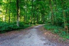 Bana som går inom skog i den Haagse bosen, skog i Haag Arkivbilder