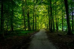 Bana som går inom skog i den Haagse bosen, skog i Haag Royaltyfri Bild