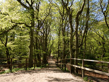 Bana som leder ner i skog Royaltyfri Bild
