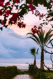 Bana som leder till stranden i Larnaca, Cypern blommor gömma i handflatan rosa trees Arkivbilder