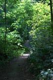 Bana som spolar dess väg till och med en tjock skog Arkivfoton