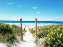 Bana som tömmer den vita sandstranden för paradis med staketstolpar och gula blommor som leder vägen i Nya Zeeland royaltyfri foto