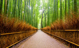Bana till bambuskogen, Arashiyama, Kyoto, Japan Royaltyfri Foto