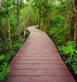 Bana till djungeln, Trang, Thailand Arkivbilder