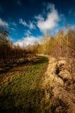 Bana till och med coppiced skogsmark Arkivfoto