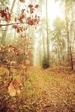 Bana till och med den dimmiga höstskogen arkivfoton