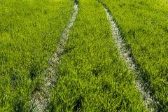 Bana till och med det gröna gräset Arkivbilder