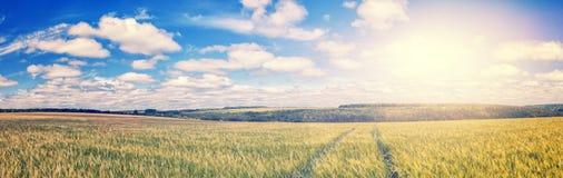 Bana till och med det guld- vetefältet, perfekt blå himmel majestätiskt lantligt landskap Royaltyfri Foto