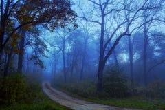 Bana till och med dimmiga Forest Woods royaltyfri fotografi