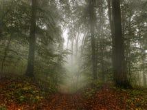 Bana till och med en dimmig skog Arkivbild