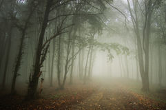 Bana till och med en härlig skog med dimma royaltyfri fotografi
