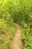 Bana till och med en skog i Cheile Nerei naturlig reservation Arkivbild