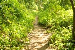 Bana till och med en skog i Cheile Nerei naturlig reservation Arkivbilder
