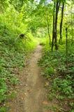 Bana till och med en skog i Cheile Nerei naturlig reservation Royaltyfri Foto