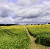 Bana till och med ett vetefält Arkivfoto