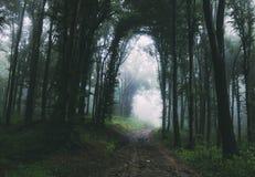 Bana till och med förtrollad mystisk skog med dimma royaltyfri bild