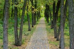 Bana till och med härlig skogsmark Royaltyfria Bilder