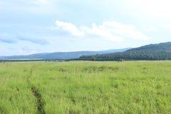 Bana till och med högväxt gräs i Mlilwane djurlivfristad i Swaziland, sydliga Afrika royaltyfri fotografi