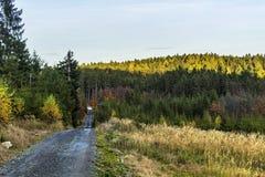 Bana till och med höstskog Arkivfoton