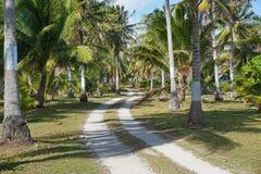 Bana till och med koloni av kokospalmer arkivbild
