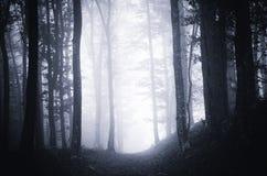 Bana till och med mörk lynnig skog med dimma royaltyfri fotografi