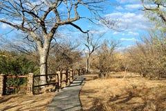 Bana till och med scenisk skog Arkivfoto