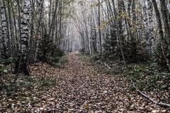 Bana till och med skog Royaltyfri Fotografi