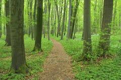 Bana till och med skog Arkivfoton