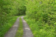 Bana till och med skog Arkivfoto