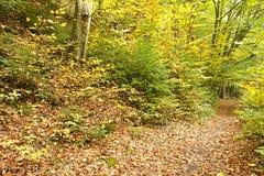 Bana till och med skog Royaltyfri Foto